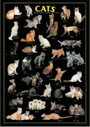 Wide Wild Life - Cats RICO5804N00028